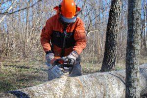 Tree Service Mobile AL